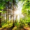 Пісні про красу природи